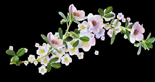 Клипарт цветы пионы